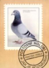 Poštovní holubi - jak je poznáváme