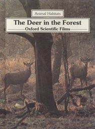 The Deer in the Forest